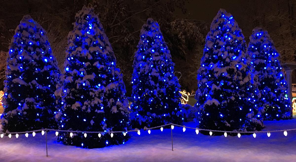Santa's Village Outdoor Christmas Trees
