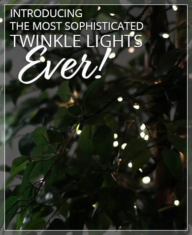 SoftTwinkle LED Christmas Lights