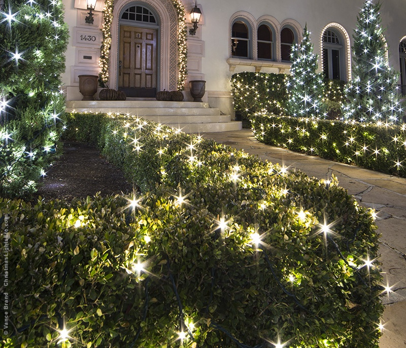 String Lights Wrapping Bushes