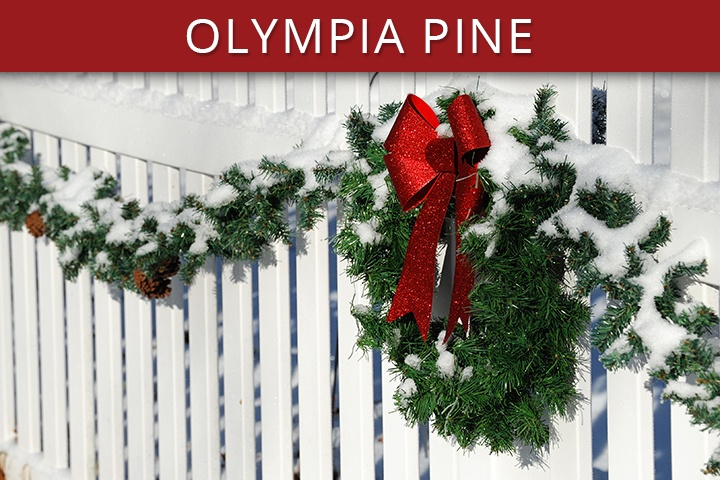 Olympia Pine Commercial Christmas Trees