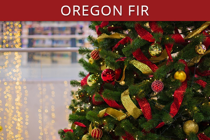 Oregon Fir Commercial Christmas Trees