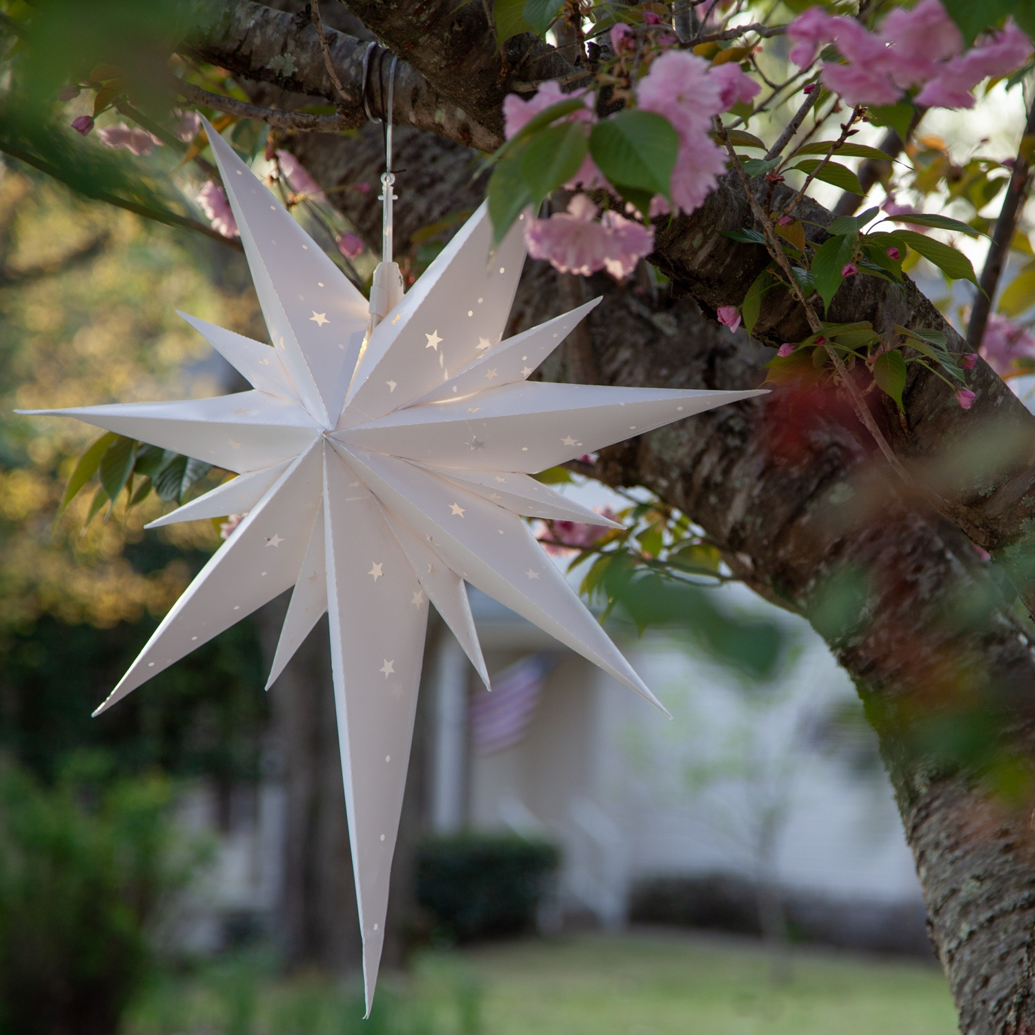 Star Light Decorations Hanging in a Tree