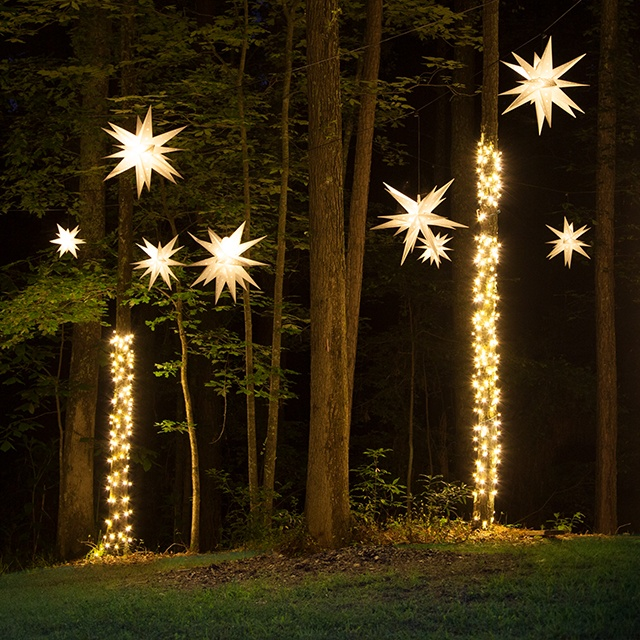 Star Lights Hanging in a Forest