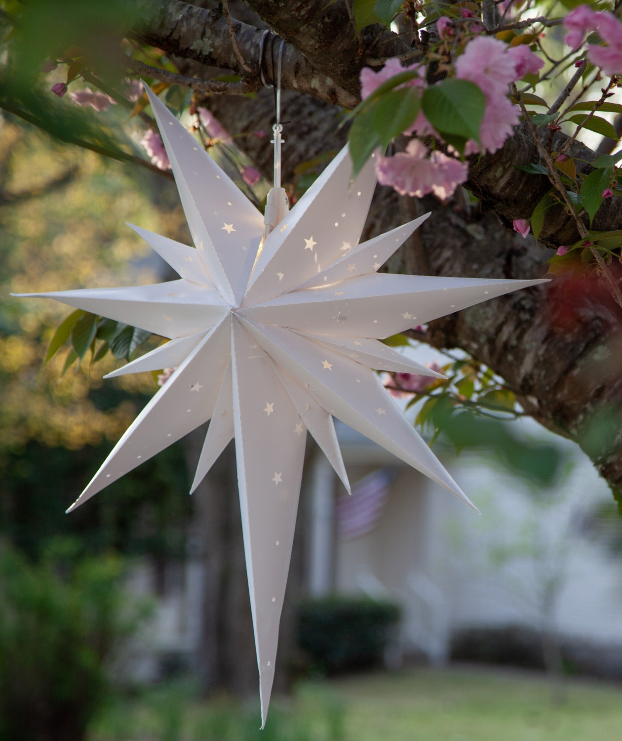 Bethlehem Christmas Star Light Decoration Hanging in a Tree