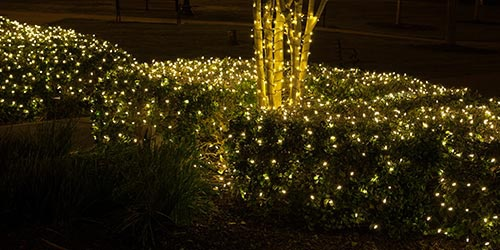 Net Lights For Bushes