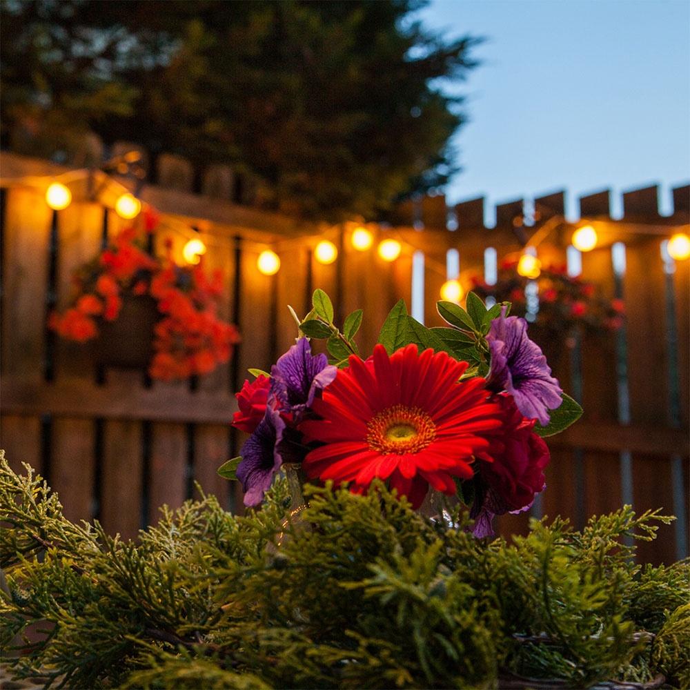 White Globe Lights Draped Across a Garden Fence