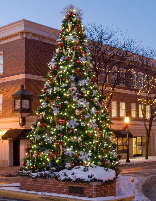 Giant Everest Fir Christmas Tree With LED Lights   17u0027 Giant Everest  Commercial Christmas Tree, 5mm Warm White LED Lights