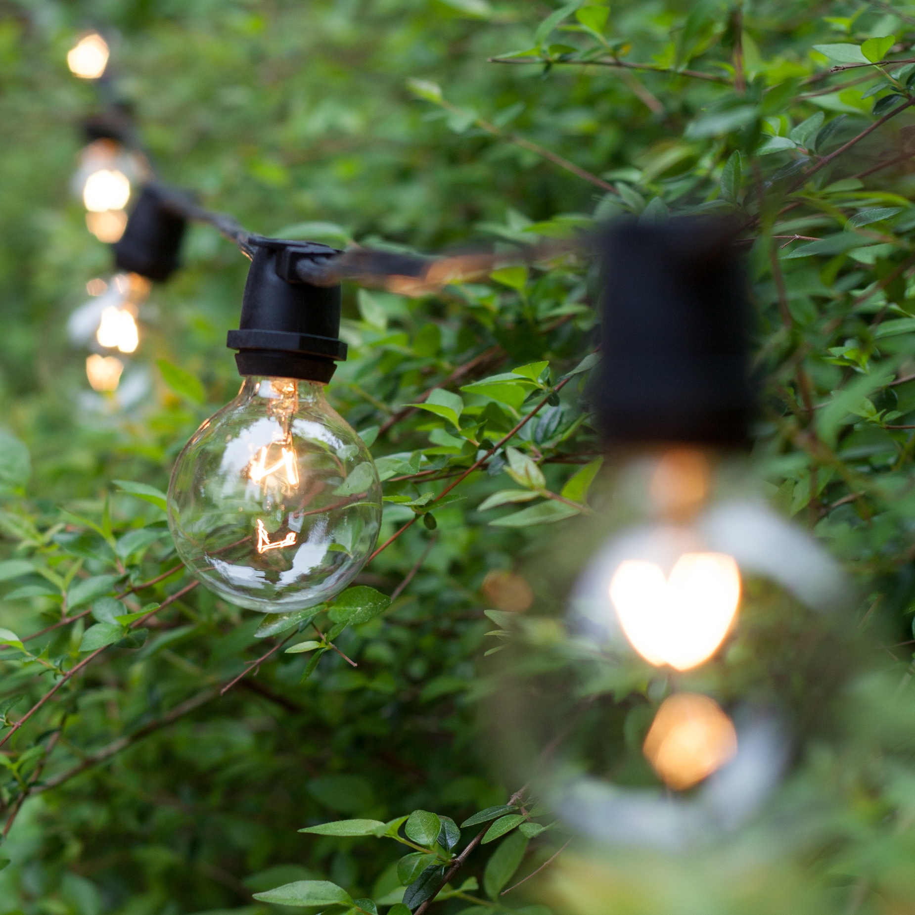 100u0027 Commercial Patio String With 75 G50 Clear Globe Lights