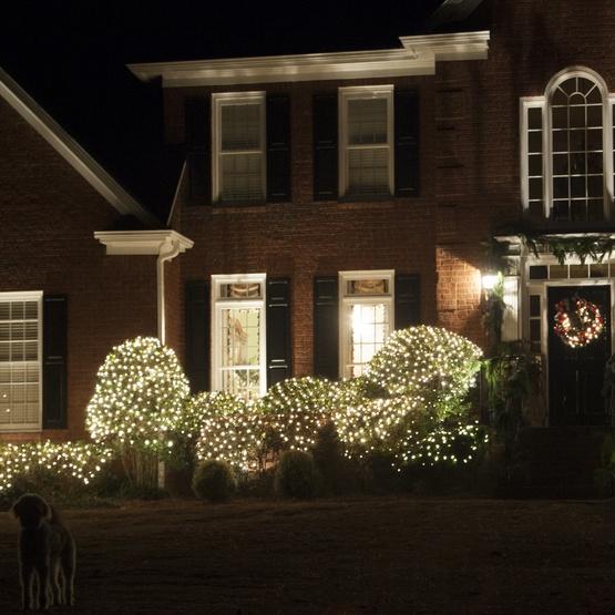 4 x 6 twinkle net lights 150 clear lamps green wire