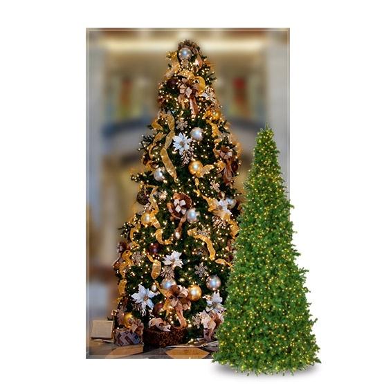 Giant Trees 15 Olympia Pine Mini Frame Full Prelit