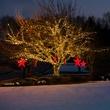 "50 5mm Warm White LED Christmas Lights, 4"" Spacing"